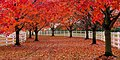 Red trees over white picket fenced path near Colts Neck, NJ.jpg