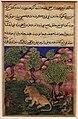 Regno moghul di akbar, storie di un pappagallo (tuti-nama) 04 la scimmia rassicura il leone che riprenderà la sua tana, 1560 ca.jpg