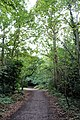 Richmond Park, London - 2018 - 2.jpg