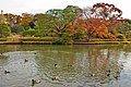 Rikugi-en Gardens, Tokyo; November 2012 (10).jpg