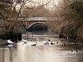 River Blackwater in Kelvedon, Essex - geograph.org.uk - 303018.jpg