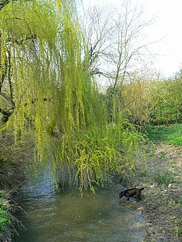 River Cole, Coleshill, Oxfordshire - geograph.org.uk - 393529