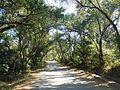 Road to Kakrebihar 01.jpg
