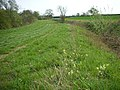 Roman Road with Cowslips - geograph.org.uk - 404191.jpg