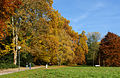 Rombergpark-Herbst-2015.jpg