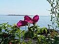 Rose at Marshall Point.jpg