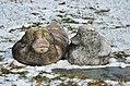 S.O.S. Natur 01 by Antonina Wysocka-Jończak.jpg