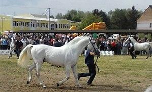 Slavonski Brod - Slavonski Brod agricultural fair