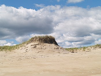 Sand dunes on Plum Island, Massachusetts.