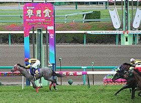 Satsuki Sho 20080420R1.jpg