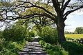 Schleswig-Holstein, Borstel-Hohenraden, Naturdenkmal 36-02 NIK 3360.JPG