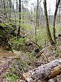 Schwäbisch-Fränkischer Wald, Bodenbachschlucht - panoramio.jpg