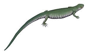 Scincosauridae - Life restoration of Scincosaurus crassus