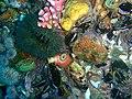 Sea anemone and sea squirt at 18m depth at SURG Pinnacles PB248852.JPG