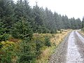 Self seeded sitka, Craik Forest - geograph.org.uk - 276795.jpg