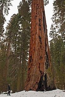 Sequoia National Park, California (2011).jpg