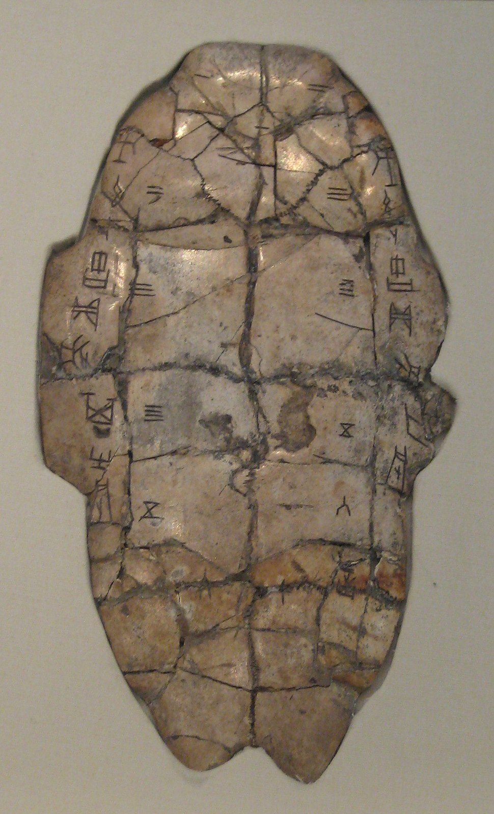Shang dynasty inscribed tortoise plastron
