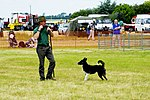 Sheep Dog Display (2620987515).jpg