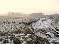 Sheep struggle with the snow, Sharvogues - geograph.org.uk - 1636757.jpg