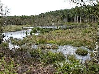 Abbotts Moss Nature Reserve