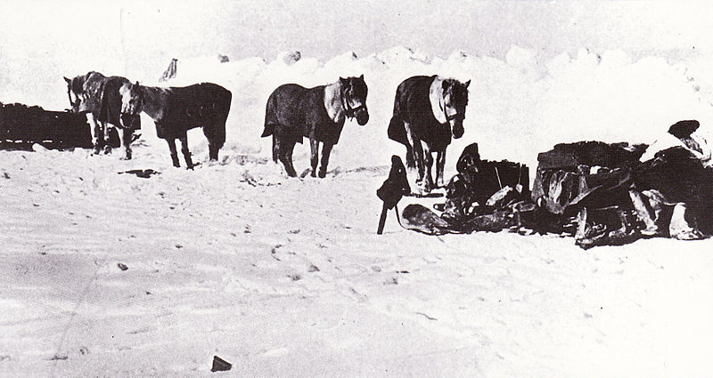 File:Siberian ponies - Terra Nova Expedition.jpg