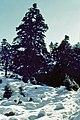 Sierra de las Nieves 1975 14.jpg