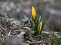 Signs of Spring (4458933636).jpg