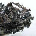 Silver-221218.jpg
