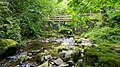 Silver River gorge, near Cadamstown, Co. Offaly. 12.jpg