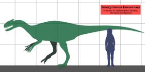 Sinotyrannus - Estimated size of Sinotyrannus, compared to a human.