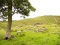 Site of Black Hill Farm - geograph.org.uk - 479711.jpg