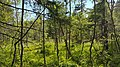 Skuleskogen 20170628 04.jpg