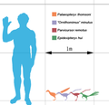 Smallest theropods scale mmartyniuk.png
