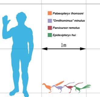 Dinosaur Size Wikipedia