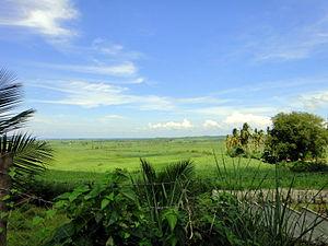 Sogod, Cebu - Tropical forest and farmland near Sogod