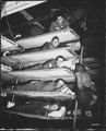 Soldiers in bunks on Army transport, S.S. Pennant, Port of Embarkation, San Francisco, California, November 1, 1942. - NARA - 531157.tif