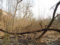 Sovetskiy rayon, Bryansk, Bryanskaya oblast', Russia - panoramio (215).jpg
