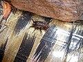 Spider019.jpg