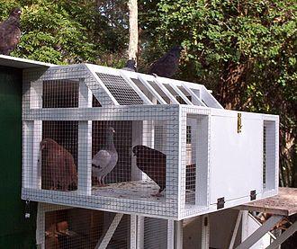 Pigeon keeping - A Sputnik trap.