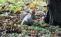 Squirrel-red-run.jpg