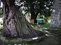 St Thomas Bedhampton, churchyard - geograph.org.uk - 1174677.jpg