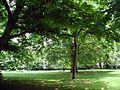 Stadtgarten-Köln-F-Im-Park-012.JPG