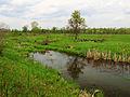 Stara Richka lake Muromets3.JPG