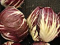 Starr 070730-7861 Chicorium intybus.jpg