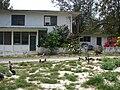 Starr 080610-8353 Nerium oleander.jpg