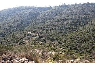 Nahal Sorek - Image: Steep mountain slopes rising above Nahal Sorek