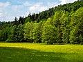 Steigerwald Schulterbachtal 5260012.jpg