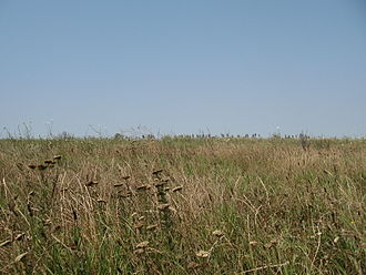 Boian culture - Native vegetation of the Wallachian Plain.
