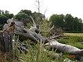 Storm damage - geograph.org.uk - 24643.jpg