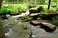 Stream-Flowing-Water ForestWander.JPG